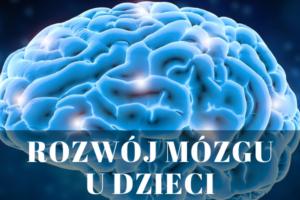Rozwój mózgu u dzieci – dlaczego dzieciństwo jest tak ważne?